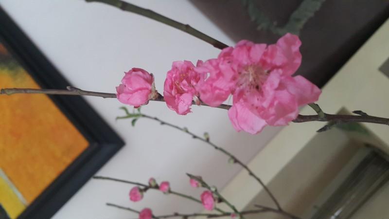 Mùa Xuân Sức Khoẻ